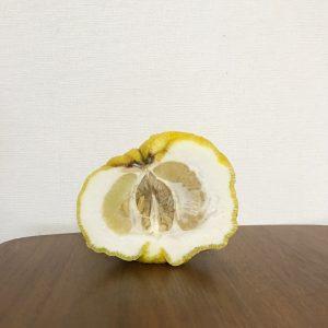 オニ柚子 中身