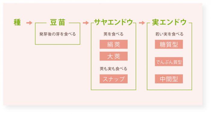 エンドウ 種類 図