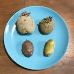 【ジャガイモ】「逆さ植え」で無肥料ジャガイモを育てる