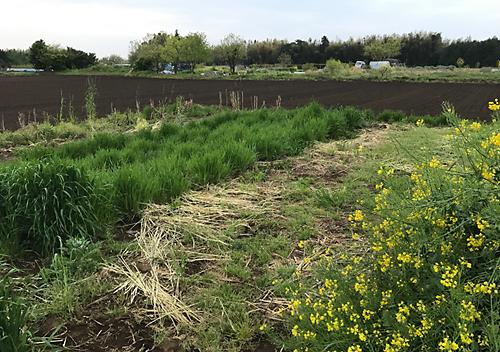 畑の様子 春 家庭菜園