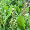 【畑の様子】夏の気配を感じ始めた4月の終わり、夏野菜の畑の準備