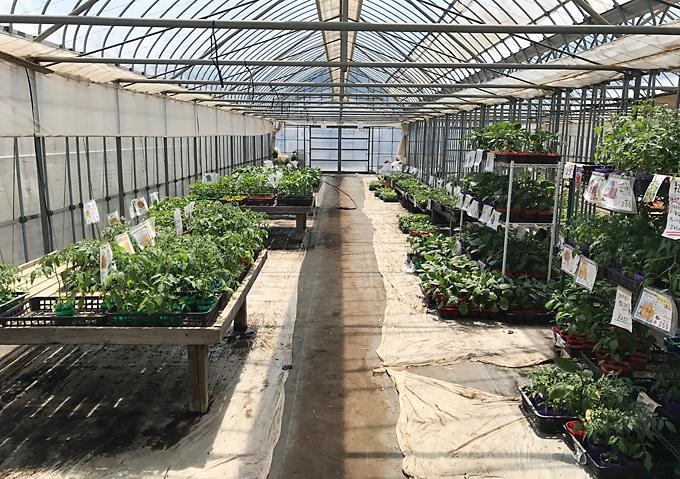 畑 苗 家庭菜園