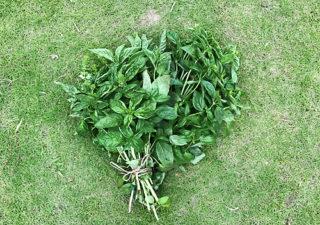 【バジル/保存】鮮やかさを保つ!フレッシュ乾燥バジルの作り方