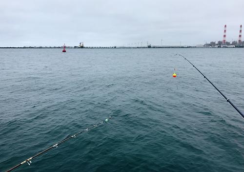 8月鹿島港釣り