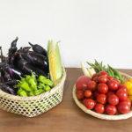 【夏野菜/収穫】8月・トマト、ナス、オクラ、カボチャの様子