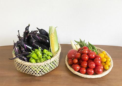 8月夏野菜の様子