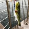 【釣り/鹿島】9月・潮が悪いが釣りをしたい。そして鹿島港に夜釣りへ。
