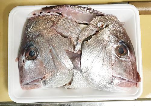 10月銚子漁港に釣りタイとウマズラを買って帰る