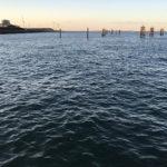 【釣り/鹿島】11月・小魚がたくさん。夕方に海釣り公園で娘とファミリーフィッシング。