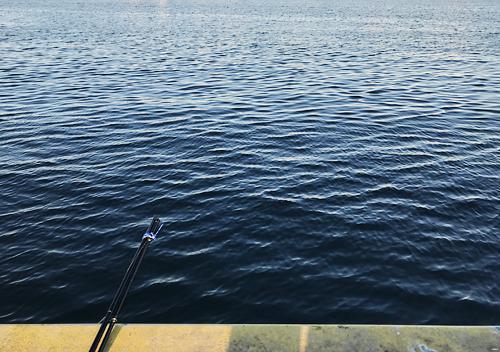 大洗港でサビキ釣りイワシが大量