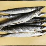 【釣り/館山】今が旬のサバとカマス。干物は脂が乗って美味いこと!