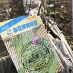 【エンドウ豆/発芽】蒔き忘れたエンドウ豆…2月蒔きでも発芽はしました。