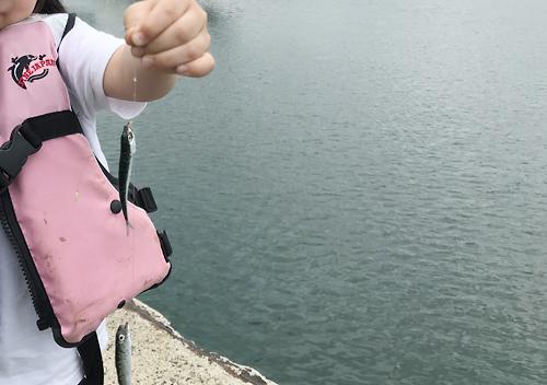 小サバが回遊するGWに鴨川でファミリーフィッシング
