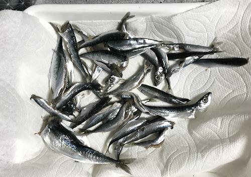 ファミリーフィッシングで釣った小鯖を南蛮漬けに