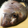 【釣り/館山】7月・堤防でめで鯛マダイ。今度は40オーバー!!