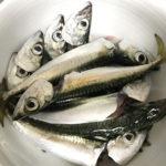 【釣り/波崎】9月・サイズアップ!巨大港で夕方2時間のファミリーフィッシング。