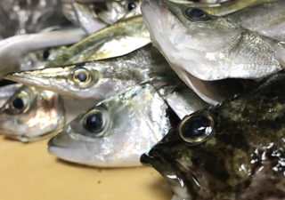 【釣り/内房】10月・堤防で五目釣り。アジが沢山釣れるたので、泳がせで大物狙い!
