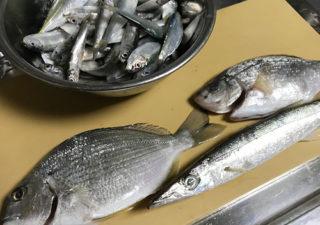 【釣り/館山】12月・大アジ、カマス。寒さに耐えればたくさん釣れそうです!