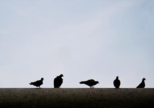 鳩被害対策ベランダ