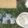 【堆肥/魚】魚の残飯どう処理します?米ヌカと混ぜて堆肥化してみます。