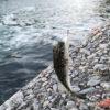 【釣り/勝浦・鴨川】3月・水温上昇!外房の釣り場散策に出かけてみました。