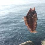【釣り/鹿島】5月・まるで夏の海。青物も回遊しているみたいですよ。