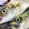 【釣り/いすみ】6月・家族連れにも快適、太東港。そしてワカシがやって来た。