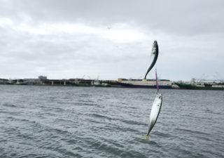 【釣り/波崎】7月・巨大港で青物狙い。あんまり釣れないので港の散策でも。