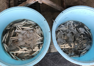 【千葉旅/九十九里】外房の旬の鮮魚を手に入れるならば、海の駅の直売所へGO!