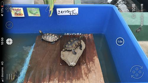 大洗水族館おすすめLINNE LENS