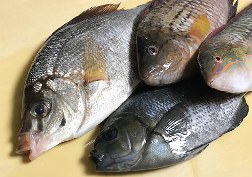 堤防釣り_千葉外房勝浦_釣果アジベラの調理レシピ