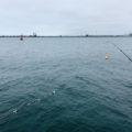 【釣り/鹿島】8月・小サバが大きくなっていました。むむっ青物は?