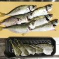 【釣り/館山】11月・アジが好調。釣れたアジを泳がせていたら...!?