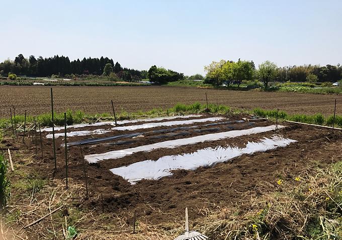 夏野菜 植付け 準備 マルチ