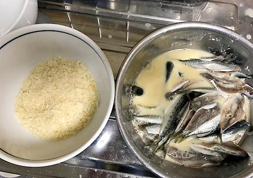 館山小サバとウツボ 鯖 釣り