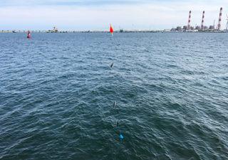 【釣り/鹿島】6月、やっぱり小サバが入れ食い