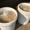 【身近な菌を使ったボカシ作り】『発酵柚子ジュースの搾りかす』を米ぬかボカシに再利用…の結果