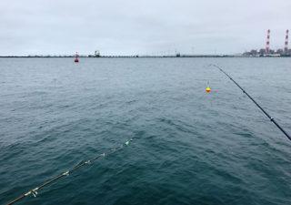 【釣り/鹿島】8月・小サバが大きくなっていました。むむっショゴ・ワカシは?