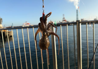 【釣り/鹿島】9月・台風後に釣りに行ったら思わぬ獲物が!