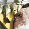 【釣りレシピ/館山】10月・釣り上げたマダイを塩焼きと鯛飯で美味しくいただきます!