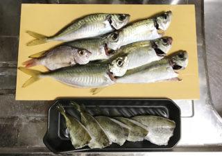 【釣り/館山】11月・アジが好調。釣れたアジを泳がせていたら…悶絶の!?