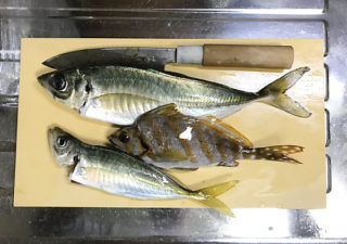 【釣り/館山】11月・好調という館山に。数は釣れぬが大物が!