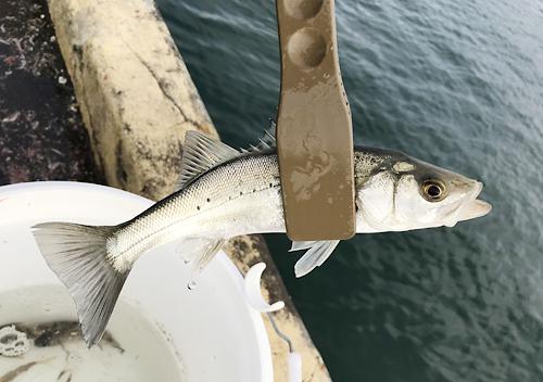 波崎新港でヒラメ釣り