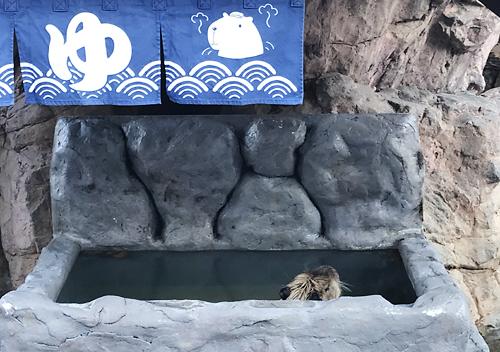 お得に大洗水族館