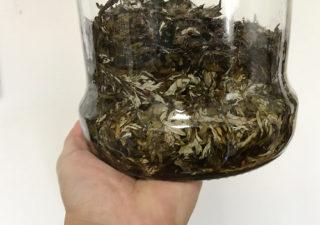 【肥料/ヨモギ】1カ月漬けこんだ発酵液「天恵緑汁」を濾過してみました。