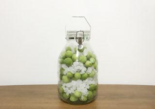 【梅シロップ】梅の実が豊作。今年もシロップを仕込みます!