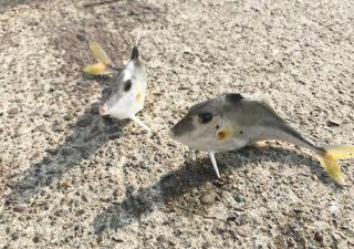 【釣り/館山】4月・トリックサビキがあれば安心!港の岸壁でファミリーフィッシング。