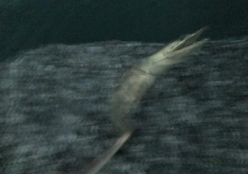 館山富浦冬の堤防釣りでアジカマス