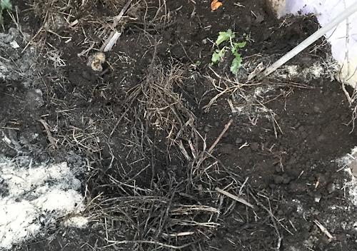 米ぬか活用方法_魚生ゴミの堆肥化
