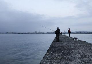 【釣り/富浦・館山・千倉】3月・アジやサヨリが釣れてる?では南房の港や堤防へ!